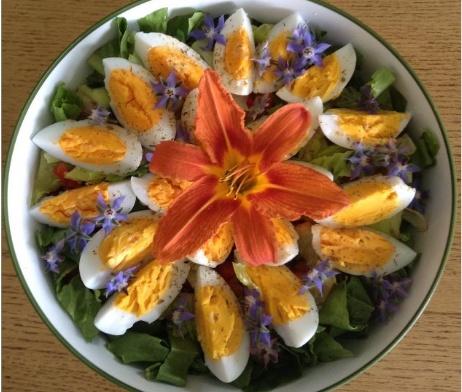 D couverte d une salade au jardin herbes orford - Calendrier des champignons comestibles ...